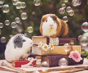 books, bubbles, and flowers image