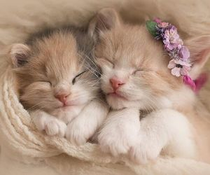 kittens and adorable image