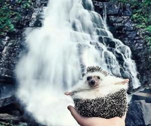 hedgehog, watch, and waterfall image
