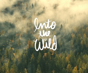 wild, forest, and nature image
