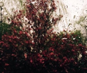aesthetic, rain, and flowers image