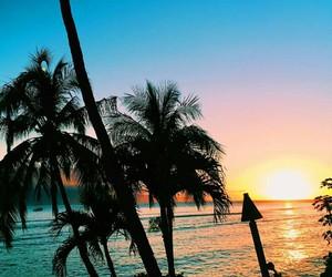 nature, sea, and palms image