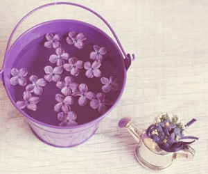 lilac and vintage image