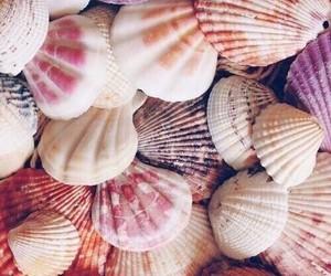shell snail star image