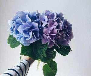 beautiful, purple, and blue image
