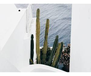blue, cactus, and green image