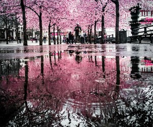 cherry, pink, and rain image