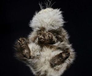 animals, art, and cat image