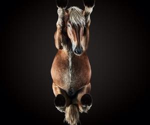 animals, art, and horse image