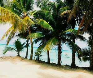 beach, ocean, and dominicanrepublic image