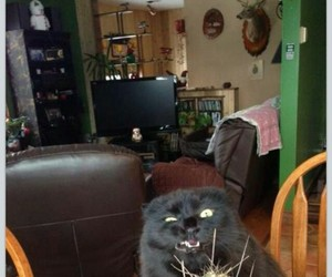 cat, fluffy, and fun image