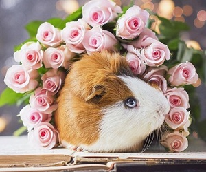 guinea pig, roses, and cute image