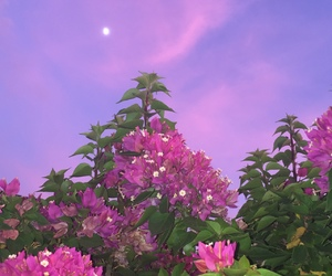 flowers, sky, and moon image