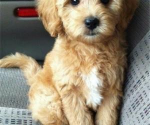 dog doggie cute adorable image