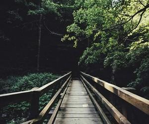 bridge, green, and nature image