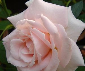 beautiful, feminine, and lovely image