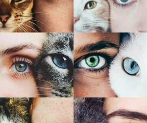 animals, look, and moments image