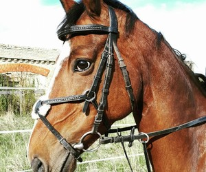 boy, bridle, and brown image
