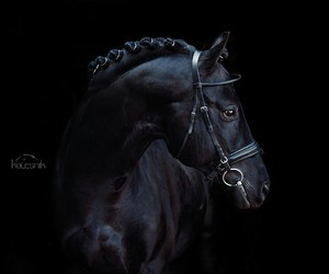 black, bridle, and coal image