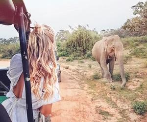 animals, elephants, and holiday image