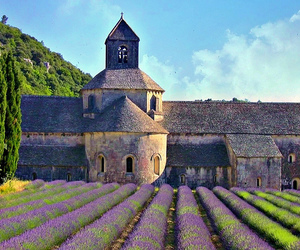 abbey, flowers, and lavender image