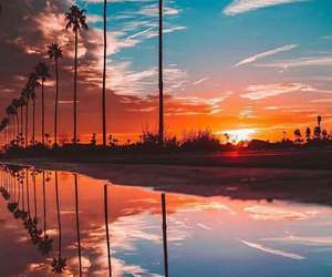 sunset, nature, and palms image
