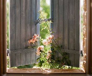 flowers, window, and pink image
