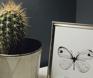 butterfly, cactus, and inspiration image
