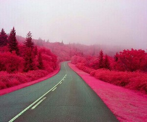 pink, road, and street image