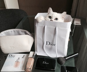 cat, dior, and animal image