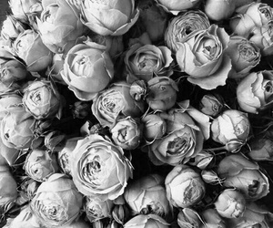flowers, rose, and grey image