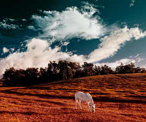 clouds, horse, and country image