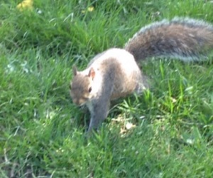 animals, squirrels, and beauty image