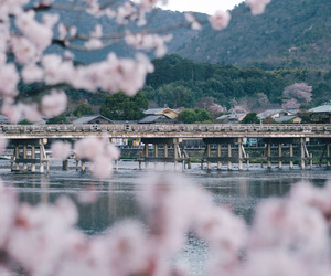 japan, nature, and kyoto image
