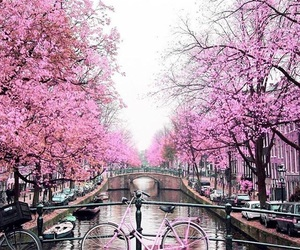 pink, tree, and amsterdam image