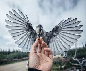 beautiful and bird image
