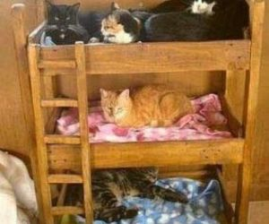 beds and cats image
