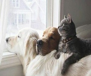 adorable, animals, and pets image