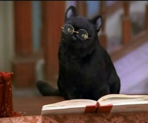 black, book, and cat image