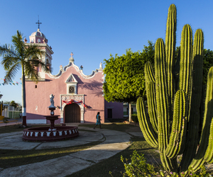 cactus, mexico, and pink image