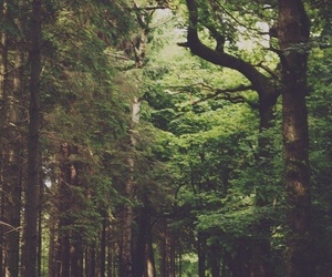 forest, green, and life image