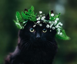 cat, black cat, and kitty image