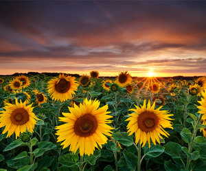 colors, sunset, and flower image