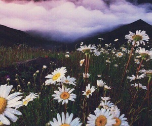 amazing, clouds, and flowers image