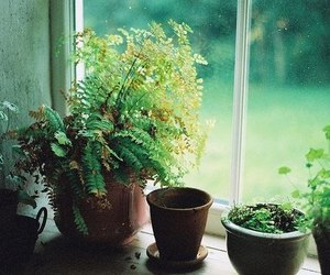 plants, nature, and green image