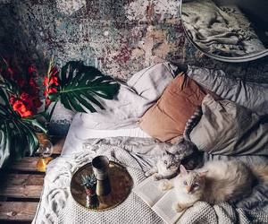 bed, cats, and room image