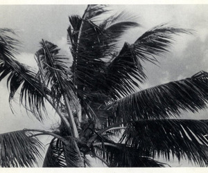 black and white, palm, and black image