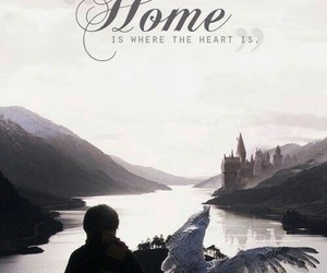 home, harry potter, and hedwig image