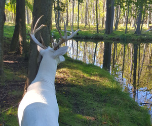 animals, deer, and white image