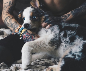 dog, animal, and tattoo image